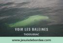 baleine-tadoussac