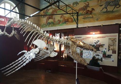 Le musée d'histoire naturelle de Marseille