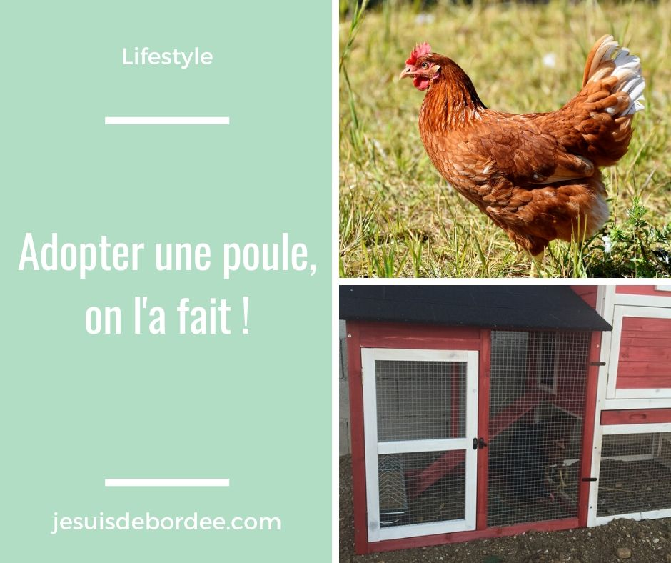 adopter une poule