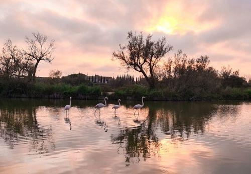 Magnifique parc ornithologique du pont de Gau